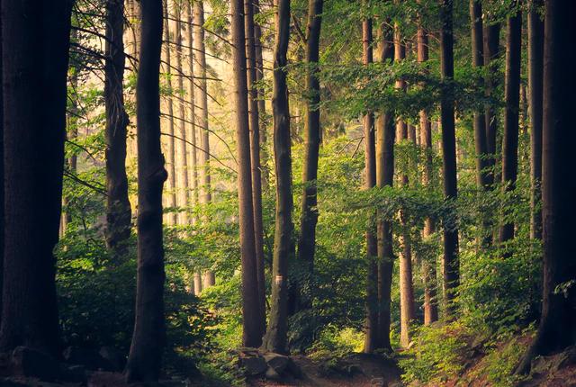 Praca w służbach leśnych