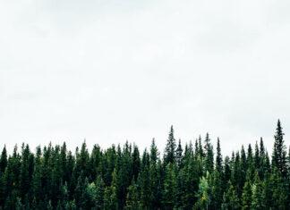 Jak dostać się do służby leśnej