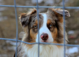 Jak zostać pracownikiem schroniska dla zwierząt