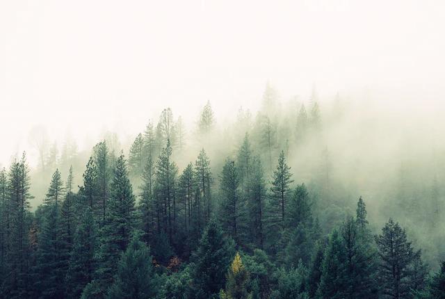 Ile zarabia się w służbach leśnych